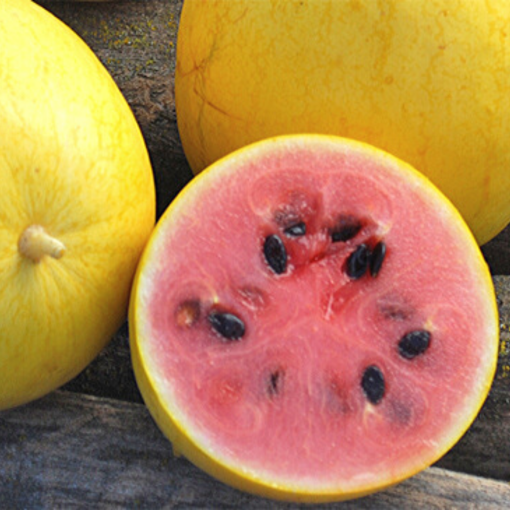Watermelon (Golden Midget)