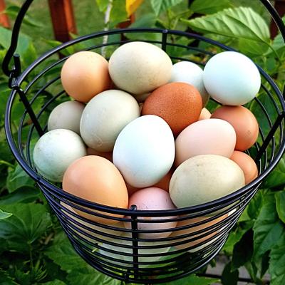 Pasture-Raised Chicken Eggs