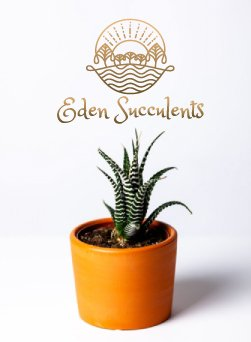 Eden Succulents
