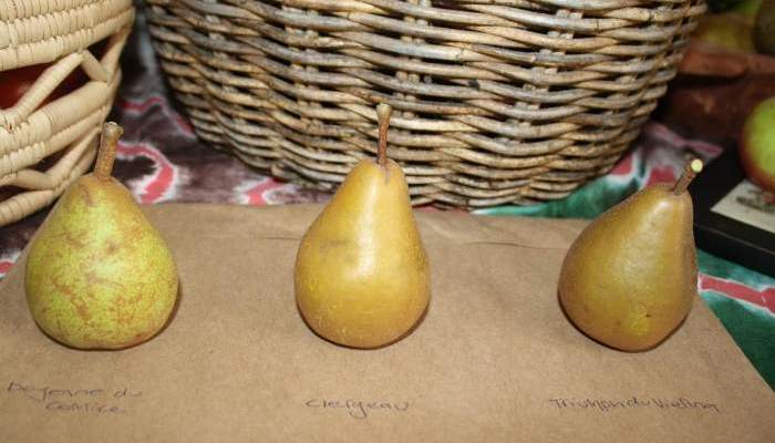 Here come the pears!