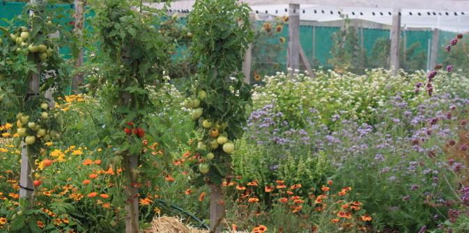 summer vegie patch