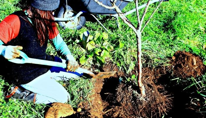 Bright Ideas For Tree Planting