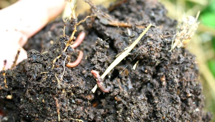 yummy soil