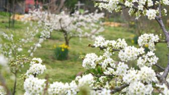 How To Plant Fruit Trees (And Bravely Prune Them)