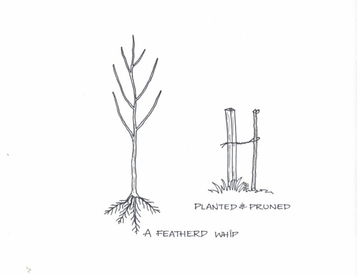 planted and pruned