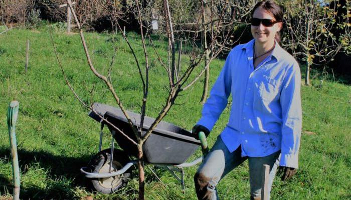 How To Plant And Prune New Fruit Tree's