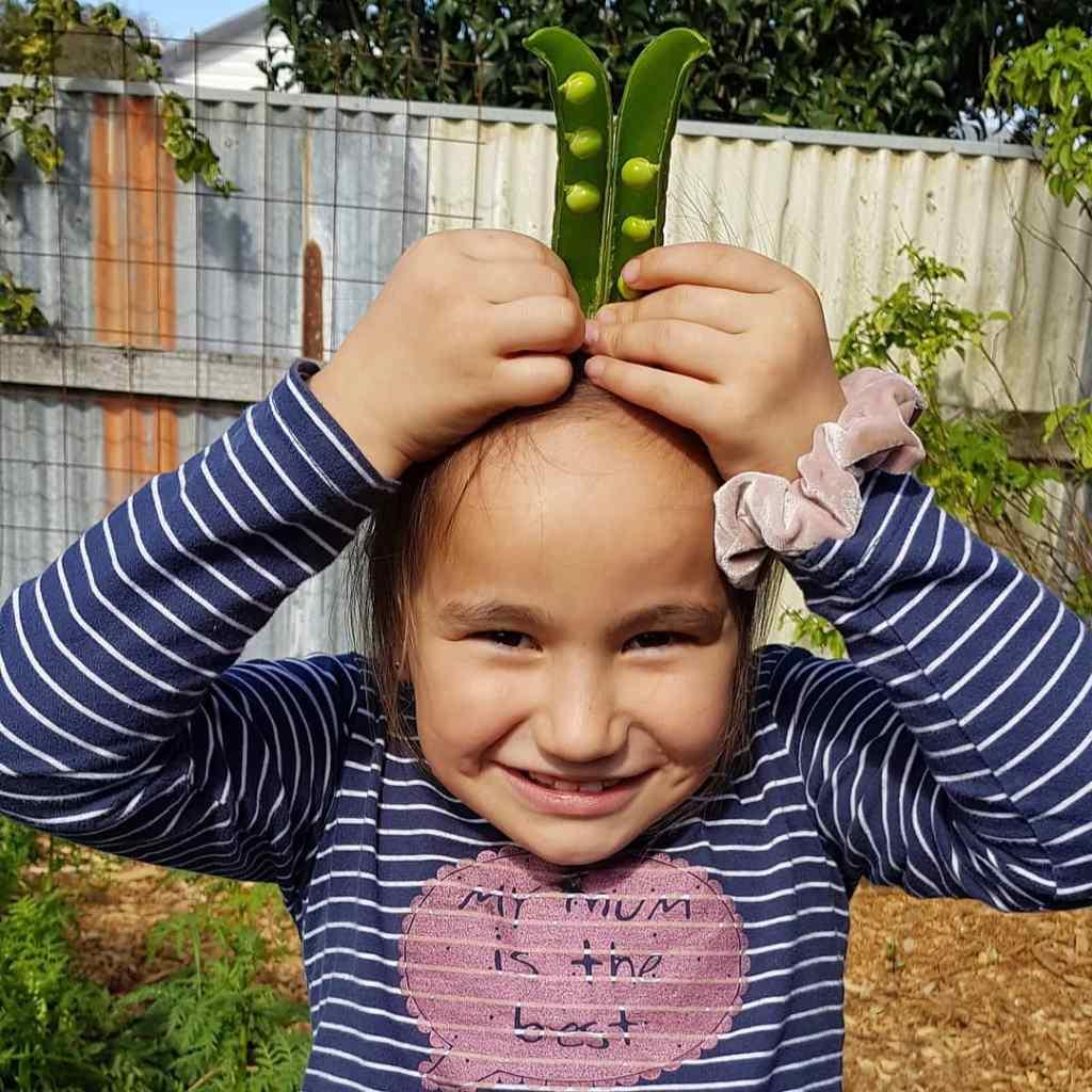 Shannon school peas from the garden