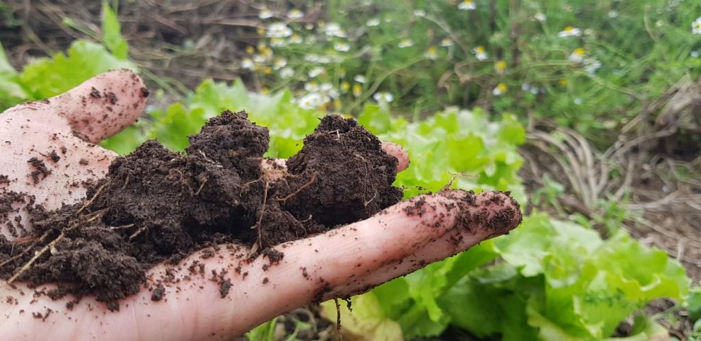 choose the best soil in your garden