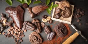 a collection of fossils all made from chocolate scattered across a slate background with cocoa powder, ammonites, trilobites, megalodon