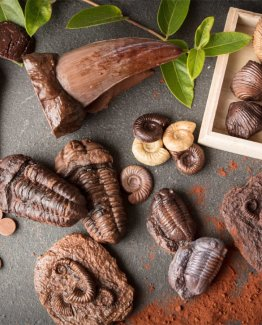 cropped-Chocolate-fossils-header.jpg