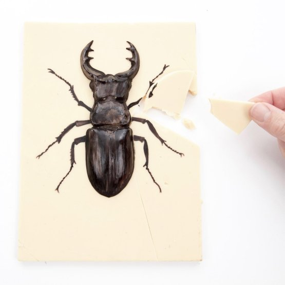 A hand snaps a piece off a white chocolate stag beetle against a white background