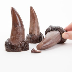 A hand holds 3 t.rex teeth made from chocolate against a white background