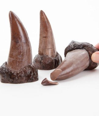 chocolate-t-rex-tooth