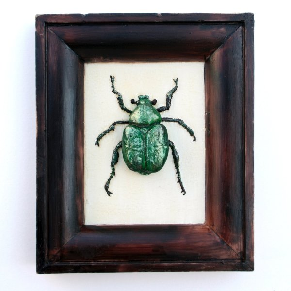 Chocolate Nobel Chafer Beetle