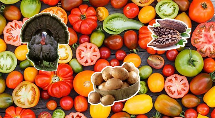I pomodori e molti altri alimenti della nostra cucina arrivarono dopo la scoperta dell'America