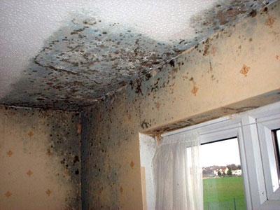Muffa Sui Muri E Sulle Pareti Di Casa Ecco Cosa Fare Per