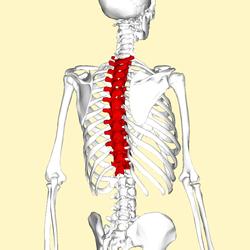 Thoracic spine rotation
