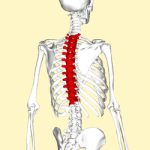 Thoracic spine rotation