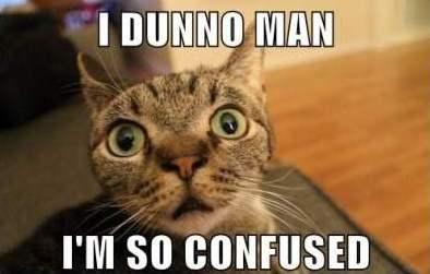 confused carb cat