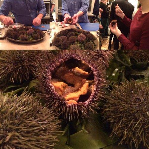 Urchins anyone?
