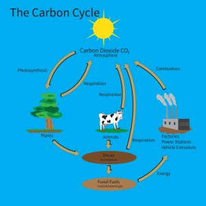 RHS Level 3 Question – Carbon Cycle   Edinburgh Garden School