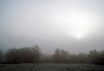 Cold- dawn.jpg