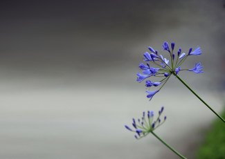 Two-blue.jpg