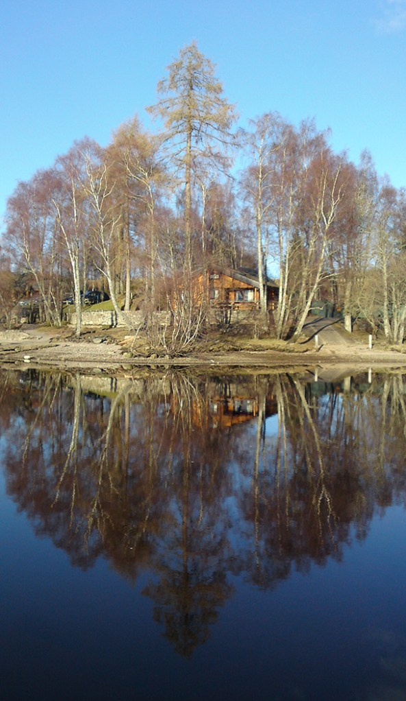 05_Reflected trees by IsobelLindsay