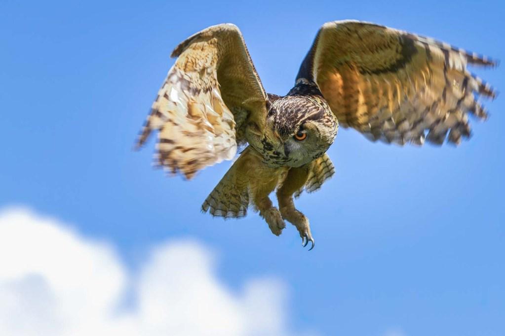 """Eagle Owl"" by Doug Berndt"