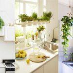 φυτά κουζίνα