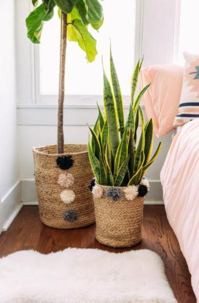 κασπό καλάθι φυτά