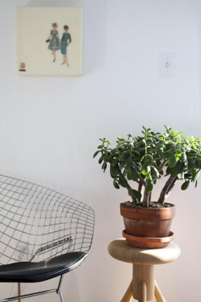 κρασούλα γλάστρα ανθεκτικά φυτά
