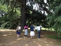 巨樹の大きさに…