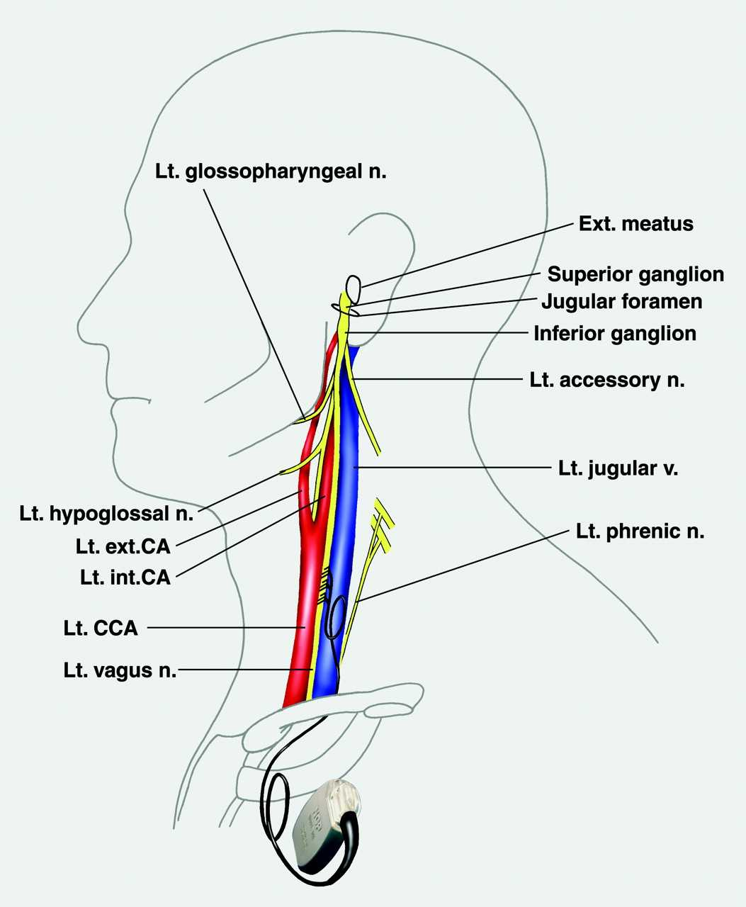 Glossopharybgeal Nerve Anatomy Page 38