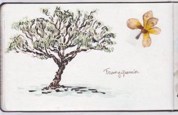 Un frangipanier