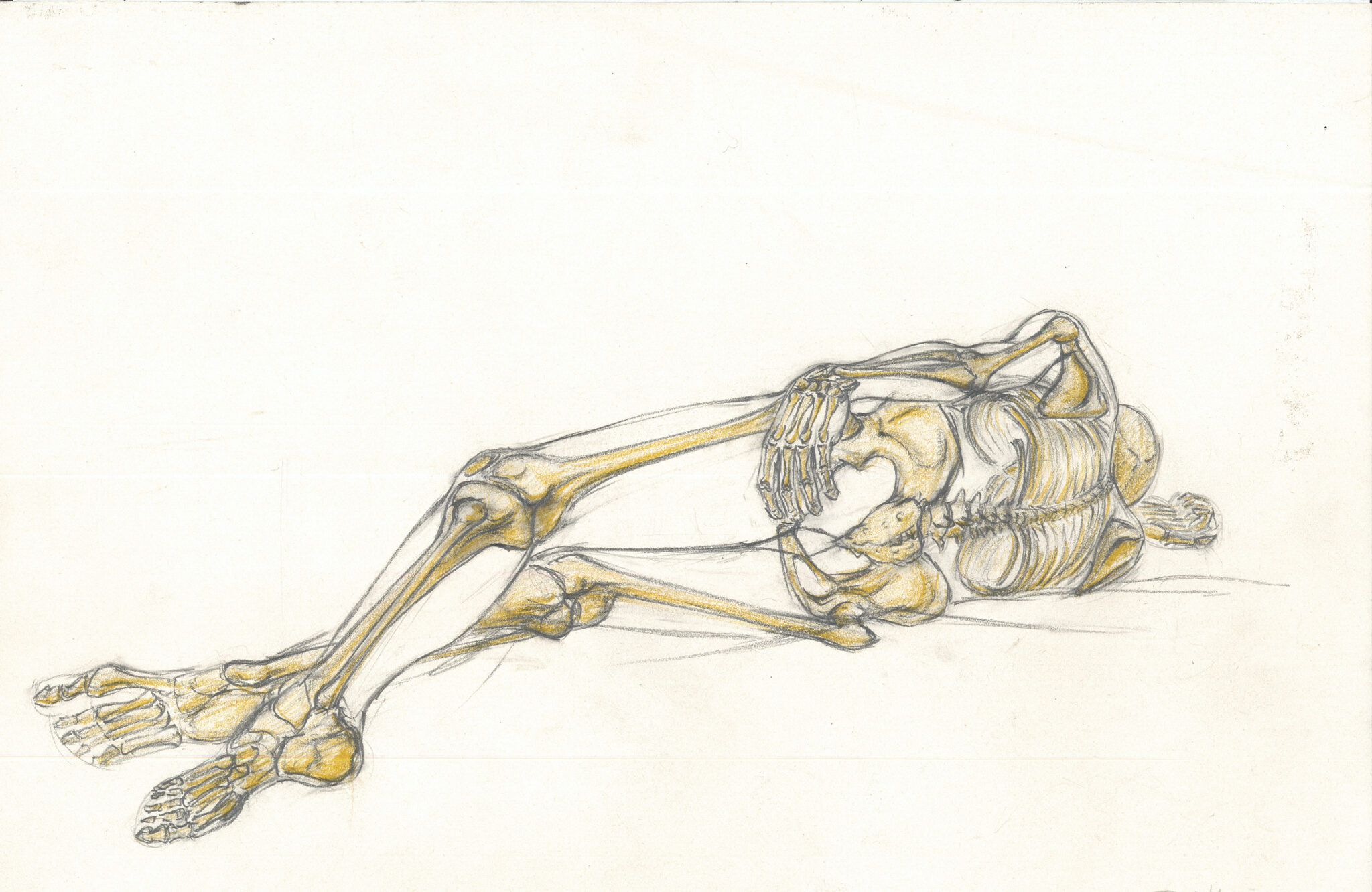 Squelette (crayon, crayon couleur)