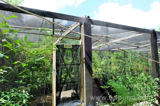 butterfly garden in capiz