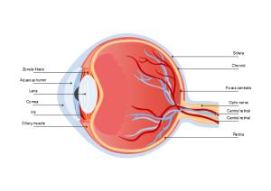 Eye Diagram | Free Eye Diagram Template