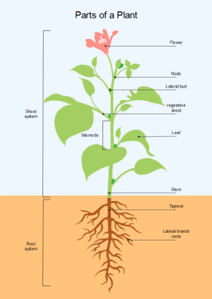Parts of Plant | Free Parts of Plant Templates