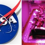 NASA To Grow Flowers In Space For First Time
