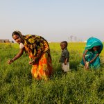 ADB approves loan to improve Madhya Pradesh's irrigation system