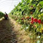 Horticulture output marginally up at 314.87 mt in 2018-19