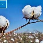 World Cotton Day' ceremony, 2019