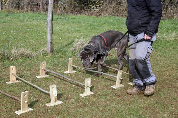 Exercice d'équilibre et de souplesse pour les chiens