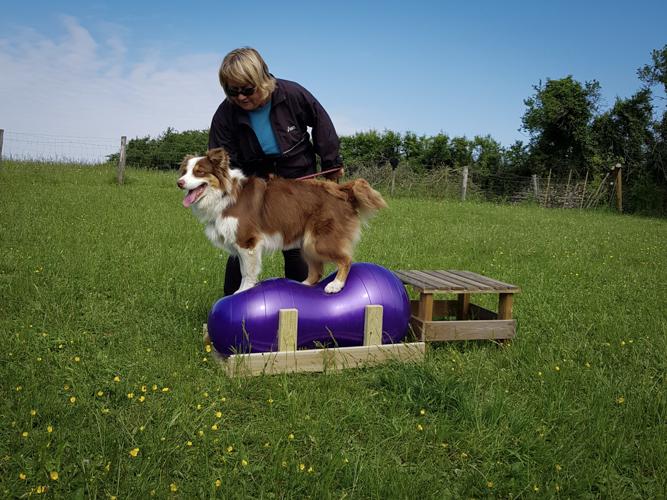 Exercice de fitness canin