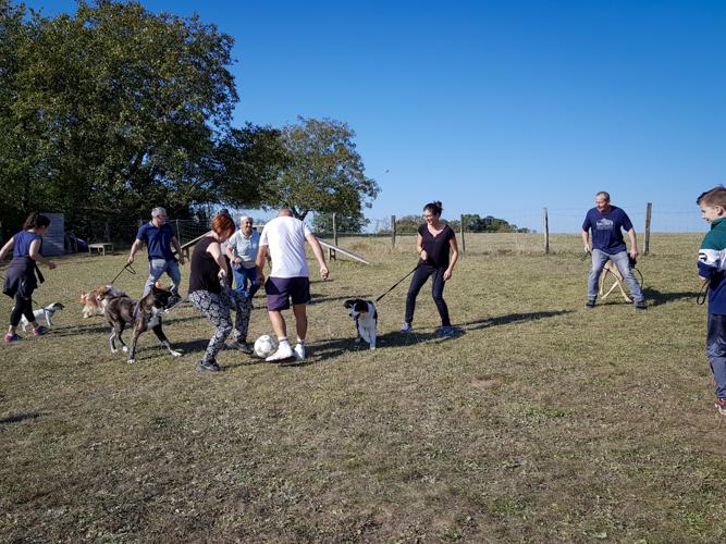 Foot avec les chiens