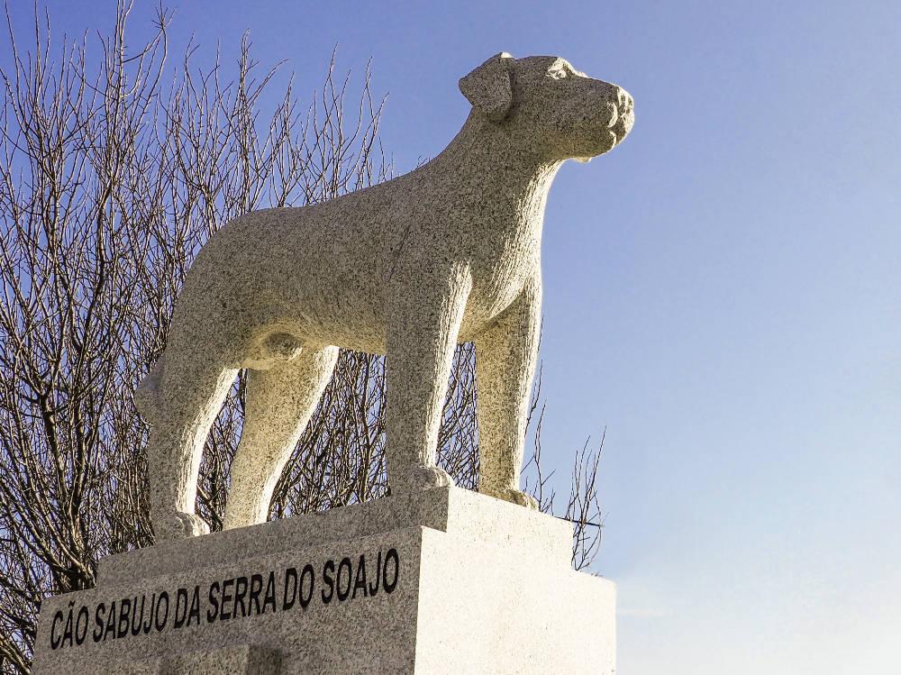 Cão Sabujo da Serra do Soajo