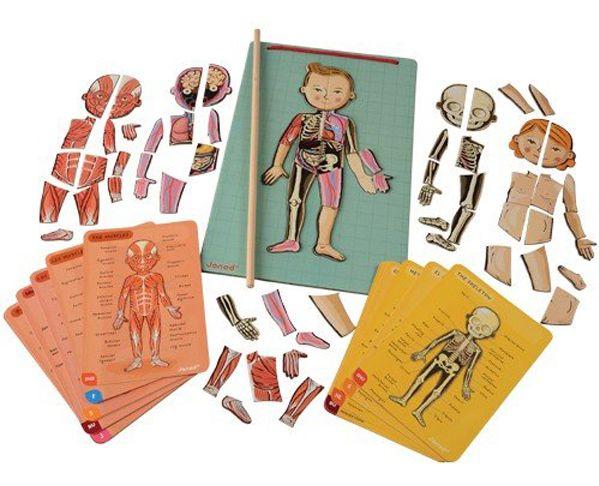 bodymagnet juego cuerpo humano