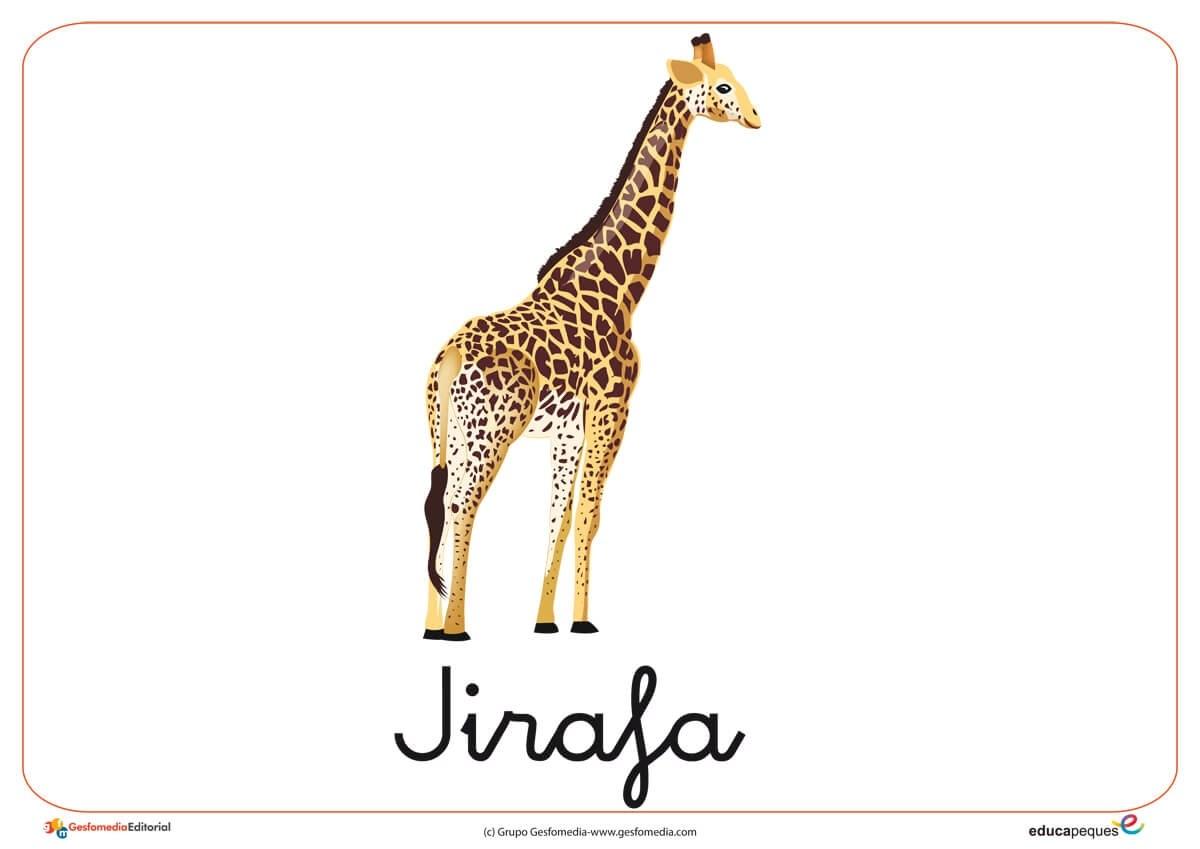Fichas de Animales Salvajes: Jirafa