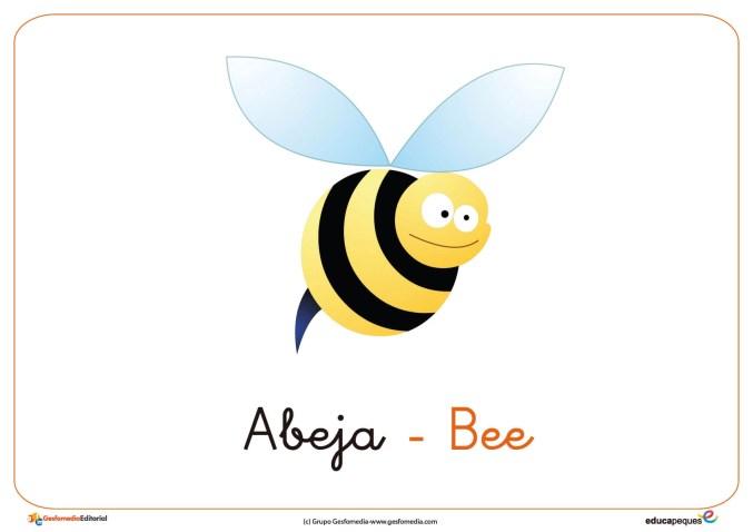 abeja ficha insectos